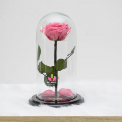 Rosa Preservada Rosada