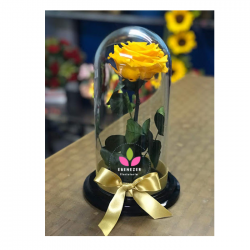 Rosa Preservadda Amarilla
